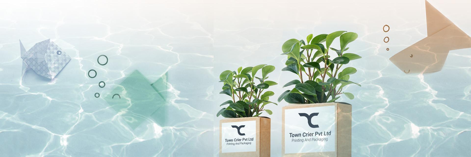 Town Crier Pvt Ltd-Eco Friendly Packaging
